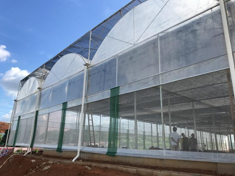 深圳温室大棚,深圳蔬菜大棚,蔬菜大棚【玉米大棚】