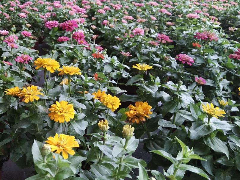 花卉大棚温室-煌城温室花卉温室大棚