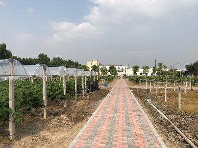 葡萄棚广州花都葡萄棚建设