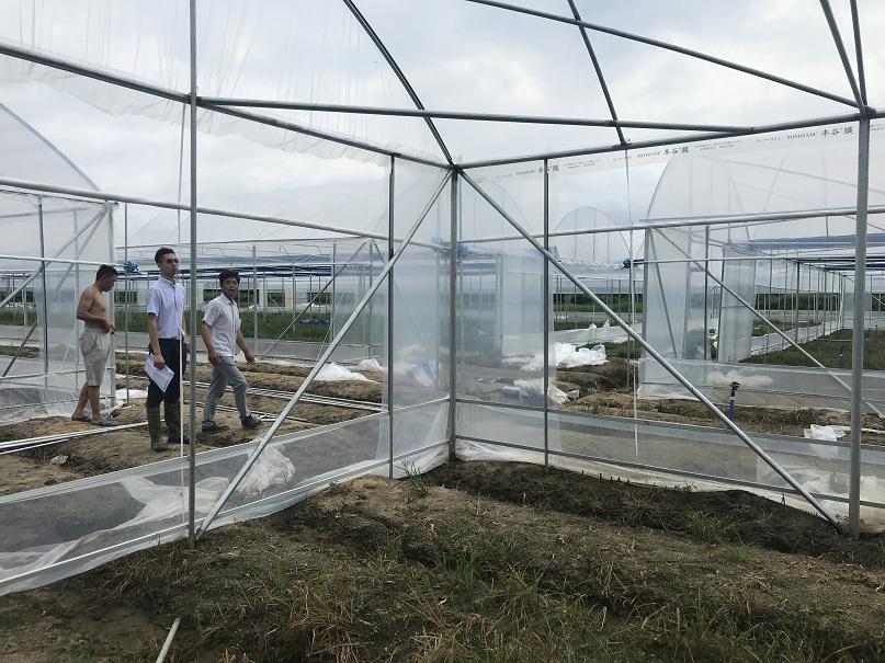 蔬菜大棚-煌城温室工程公司蔬菜大棚工程案例